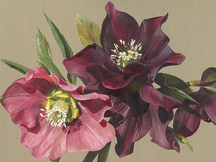 Sarah Caswell (Nightshade Hellebore) Canvas Prints